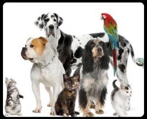 personal-assistant-pt-concierge-pets